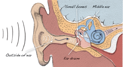 middle ear diagram